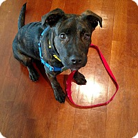 Adopt A Pet :: LIBBY - New Windsor, NY