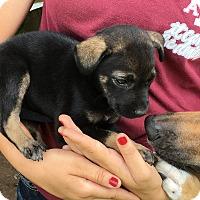 Adopt A Pet :: Maisey - Wharton, TX