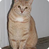 Adopt A Pet :: Hopper - Sacramento, CA