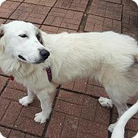 Adopt A Pet :: Dixie - Kyle, TX