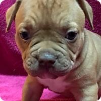 Adopt A Pet :: Darcy - San Diego, CA