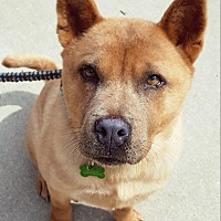 Adopt A Pet :: Friday - Fennville, MI