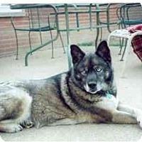 Adopt A Pet :: Samra - Belleville, MI