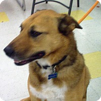 Adopt A Pet :: Reagan - Evergreen Park, IL
