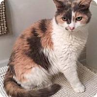 Adopt A Pet :: Gilda - Merrifield, VA