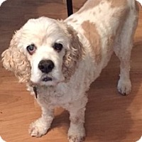 Adopt A Pet :: Cassie - Sacramento, CA