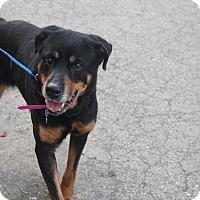 Adopt A Pet :: China - Frederick, PA