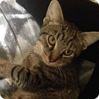 Adopt A Pet :: Bubba - McHenry, IL