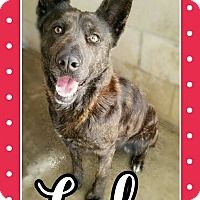 Adopt A Pet :: Lola - Edwards AFB, CA