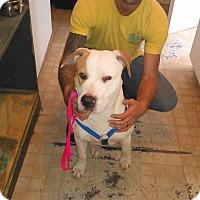 Adopt A Pet :: Aries (Male) - Marianna, FL
