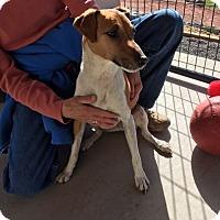 Adopt A Pet :: Loki - Cedaredge, CO