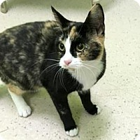 Adopt A Pet :: Pawdry Hepburn - Janesville, WI