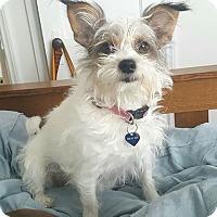 Adopt A Pet :: Phoebe - Denver, CO