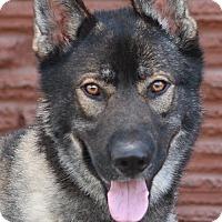 Adopt A Pet :: Duke von Dunau - Los Angeles, CA