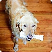 Adopt A Pet :: Gwenny - Foster, RI