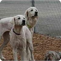 Adopt A Pet :: Zera - Ft. Myers, FL