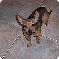 Adopt A Pet :: Peso - Tucson, AZ