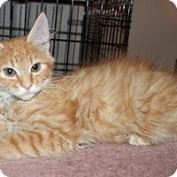 Adopt A Pet :: Chewbaka - North Highlands, CA