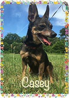Miniature Pinscher Dog for adoption in Greensboro, Maryland - Casey