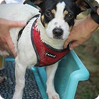Adopt A Pet :: Fritz - Conyers, GA