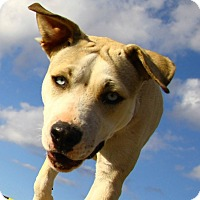 Adopt A Pet :: Luna - Alamogordo, NM