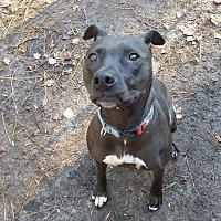 Adopt A Pet :: Sadie - Bloomfield, NJ