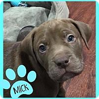 Adopt A Pet :: Mick- Adoption Pending - Des Moines, IA
