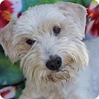 Adopt A Pet :: FINLEY - Red Bluff, CA