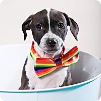 Adopt A Pet :: Denise - Houston, TX