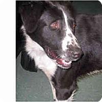 Adopt A Pet :: Charlie - Courtesy post - Scottsdale, AZ