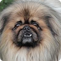Adopt A Pet :: Langdon - Richmond, VA