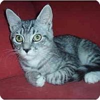 Adopt A Pet :: Perry - Davis, CA