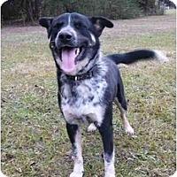 Adopt A Pet :: Oppa - Mocksville, NC