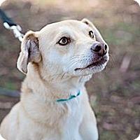 Adopt A Pet :: Zeus - Sherman Oaks, CA