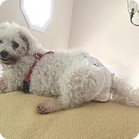 Adopt A Pet :: Minnie - East Hanover, NJ