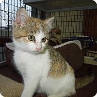 Adopt A Pet :: Merry - Medina, OH