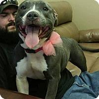 Adopt A Pet :: Kora - Lima, OH