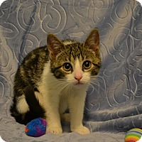 Adopt A Pet :: Steven - Oyster Bay, NY