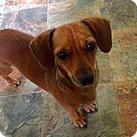 Adopt A Pet :: Mollie - Westport, CT
