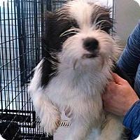 Adopt A Pet :: Timmy - E. Wenatchee, WA