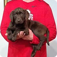 Adopt A Pet :: Zoey - New Philadelphia, OH