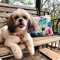 Adopt A Pet :: Emma Grace (RBF) - Spring Valley, NY