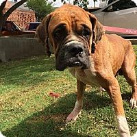 Adopt A Pet :: Miggs - Austin, TX