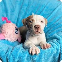 Adopt A Pet :: ROLAND - Harrisburg, PA