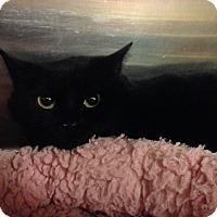 Adopt A Pet :: Ellen - Muncie, IN