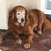 Adopt A Pet :: Buddy 665 - Naples, FL