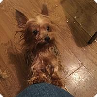 Adopt A Pet :: Lexi - Lorain, OH