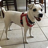 Adopt A Pet :: Mollie - Toronto, ON