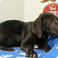 Adopt A Pet :: Bronx - Groton, MA