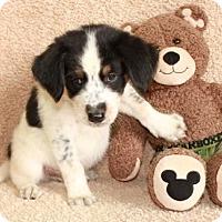 Adopt A Pet :: Fall - Salem, NH